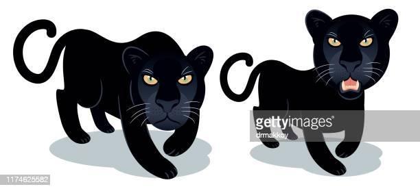 illustrazioni stock, clip art, cartoni animati e icone di tendenza di pantera nera - felino selvatico