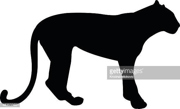 ilustraciones, imágenes clip art, dibujos animados e iconos de stock de black panther - puma