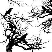 Black ravens on the old tree