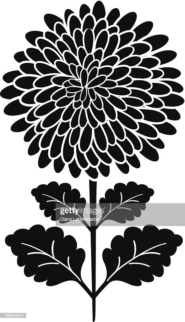 black silhouette chrysanthemum flower vector art getty