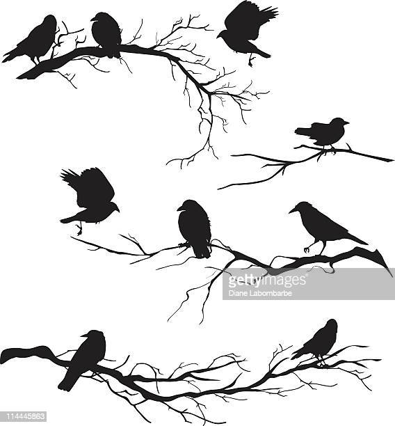 black silhouette crows perched on branches of various lengths - bare tree stock illustrations