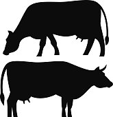 A black silhouette of a milk cow grazing