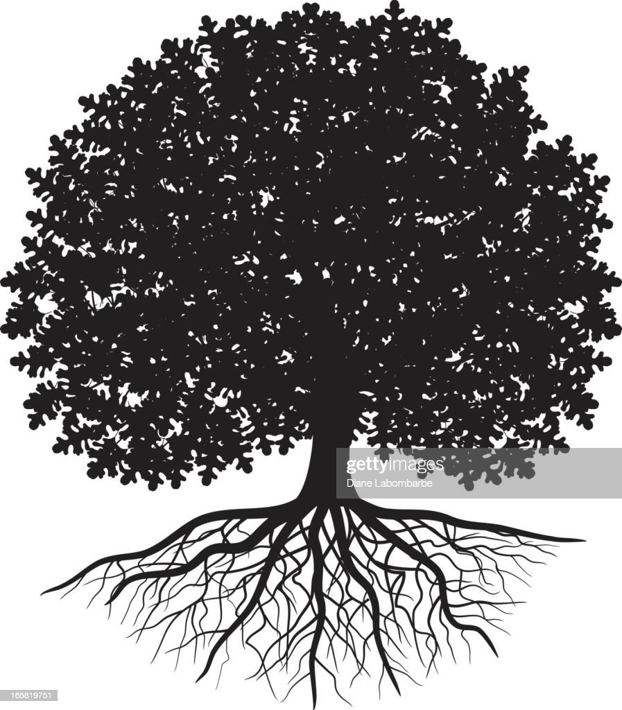Black silhouette of oak tree with leaves and visible roots : stock illustration