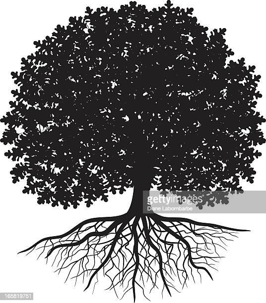 black silhouette of oak tree with leaves and visible roots - root stock illustrations, clip art, cartoons, & icons