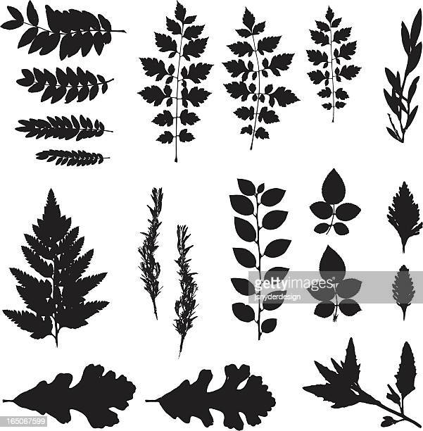 Black silhouette of various leaves on white background