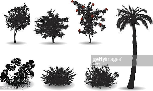 black silhouettes on white of ornamental plants - bush stock illustrations