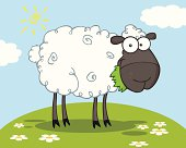 Black Smiling Sheep With Background