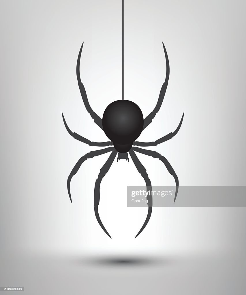 Black spider isolated.