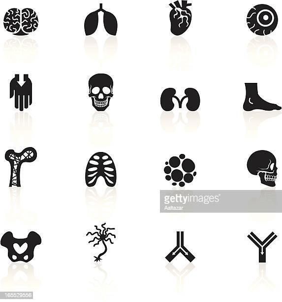 black symbols - anatomy - artery stock illustrations, clip art, cartoons, & icons