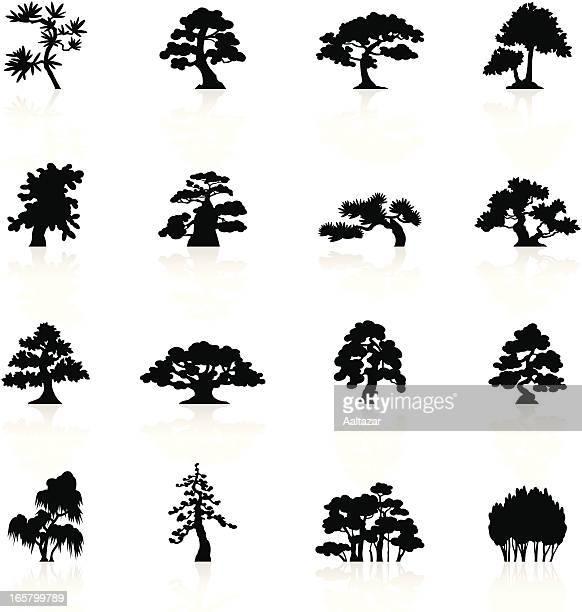 ブラックのシンボルの木の種 - アカシア点のイラスト素材/クリップアート素材/マンガ素材/アイコン素材