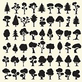 Black trees silhouettes collection