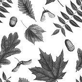 Black vintage engraving of autumn leaves