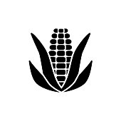 Black & white vector illustration of ear of corn with leaves & kernels. Flat icon of fresh organic maize. Vegan & vegetarian food. Isolated object on white background.