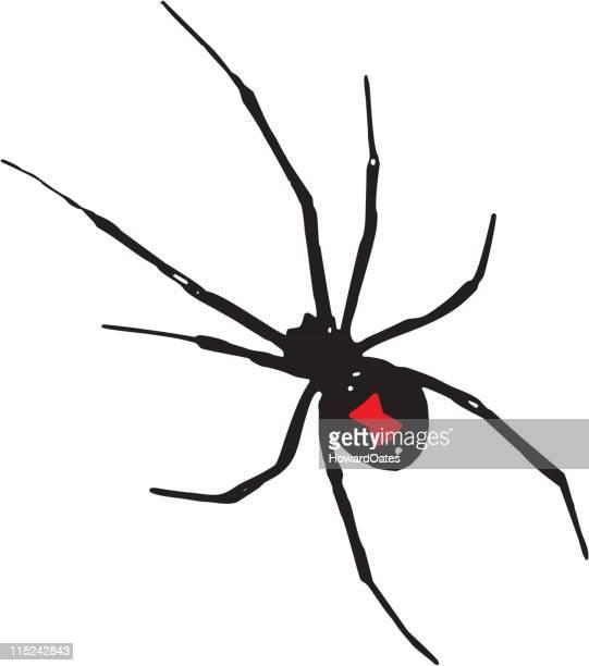 black widow spider - black widow spider stock illustrations, clip art, cartoons, & icons