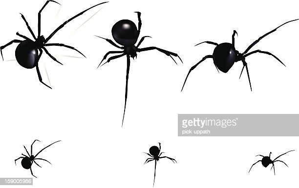 World S Best Black Widow Spider Stock Illustrations Getty