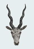 Blackbuck Antilope