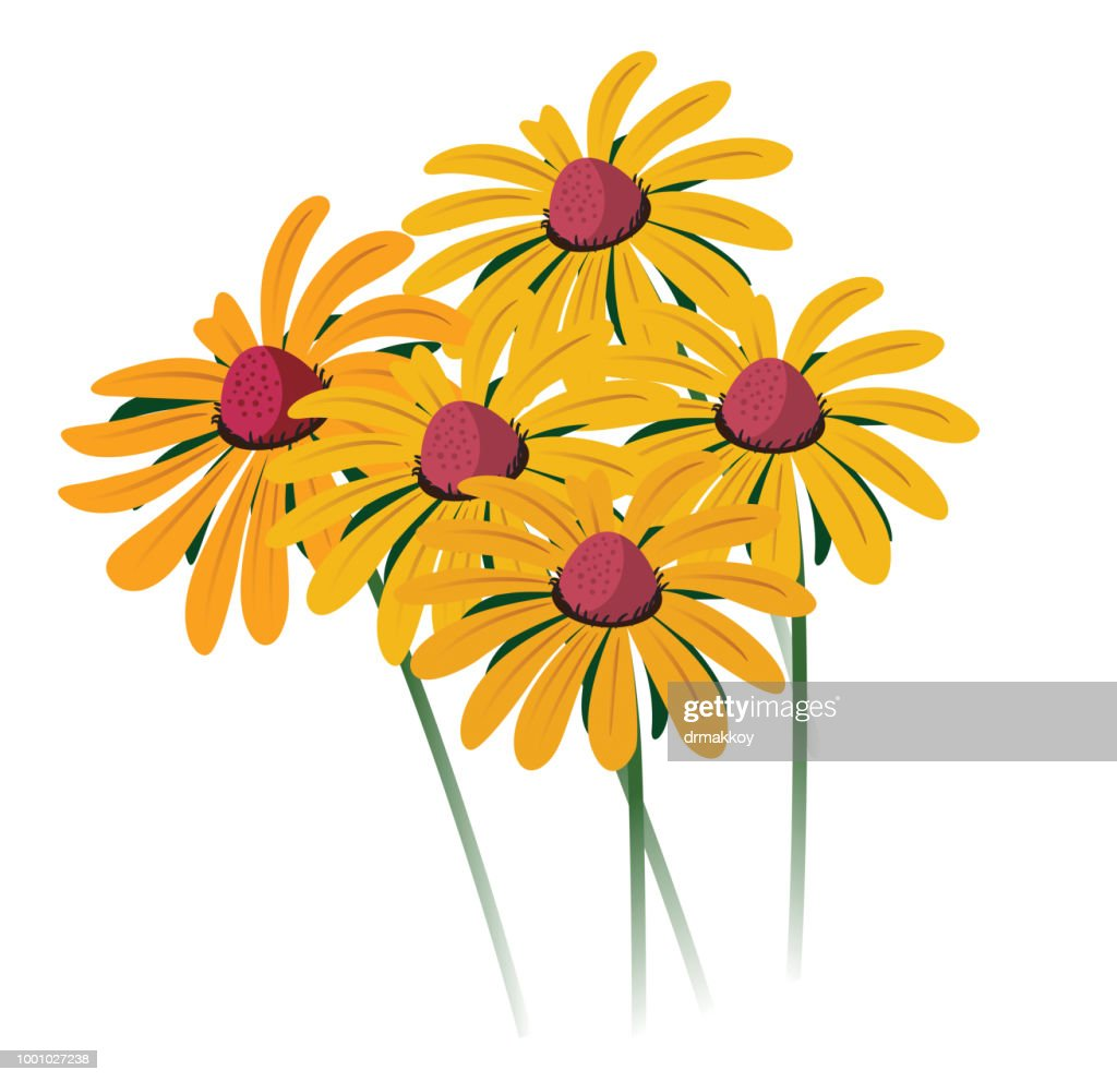 Black-Eyed Susan : stock illustration