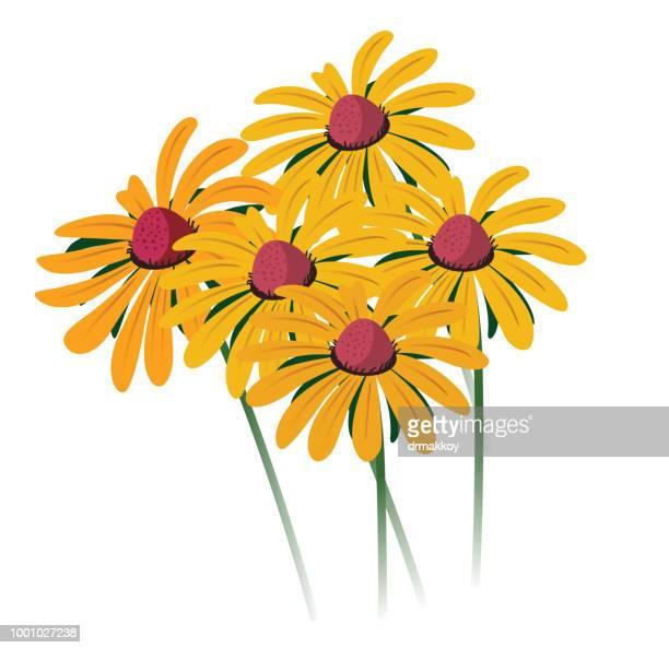 black-eyed susan - wildflower stock illustrations