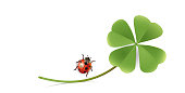 Blank paper sheet with shamrock and Ladybug, Greeting card, New Year's card, New Year,