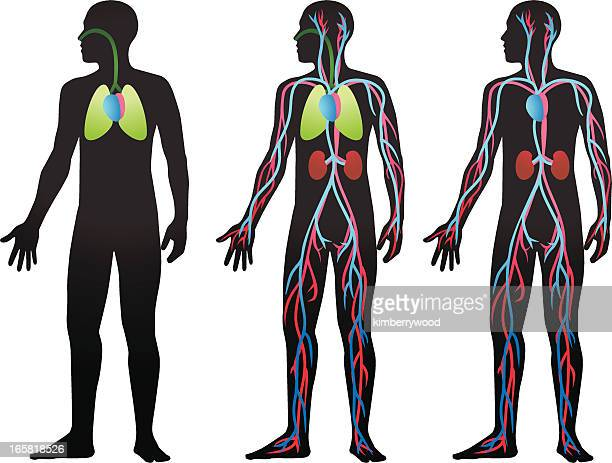 blood flow - blood flow stock illustrations