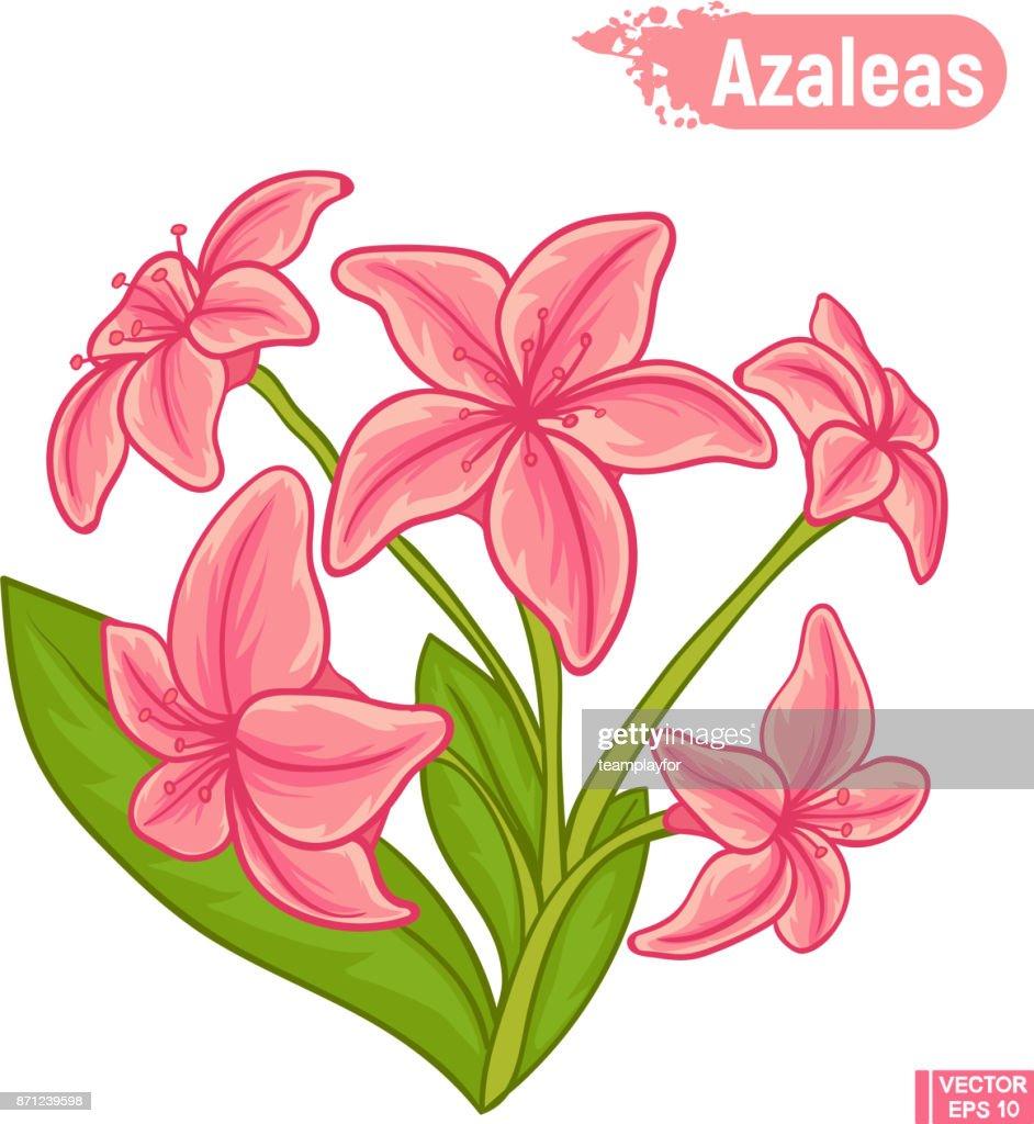Blooming azaleas flowers