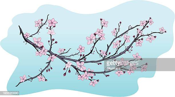 ilustraciones, imágenes clip art, dibujos animados e iconos de stock de rama de flor abriéndose - cherry tree