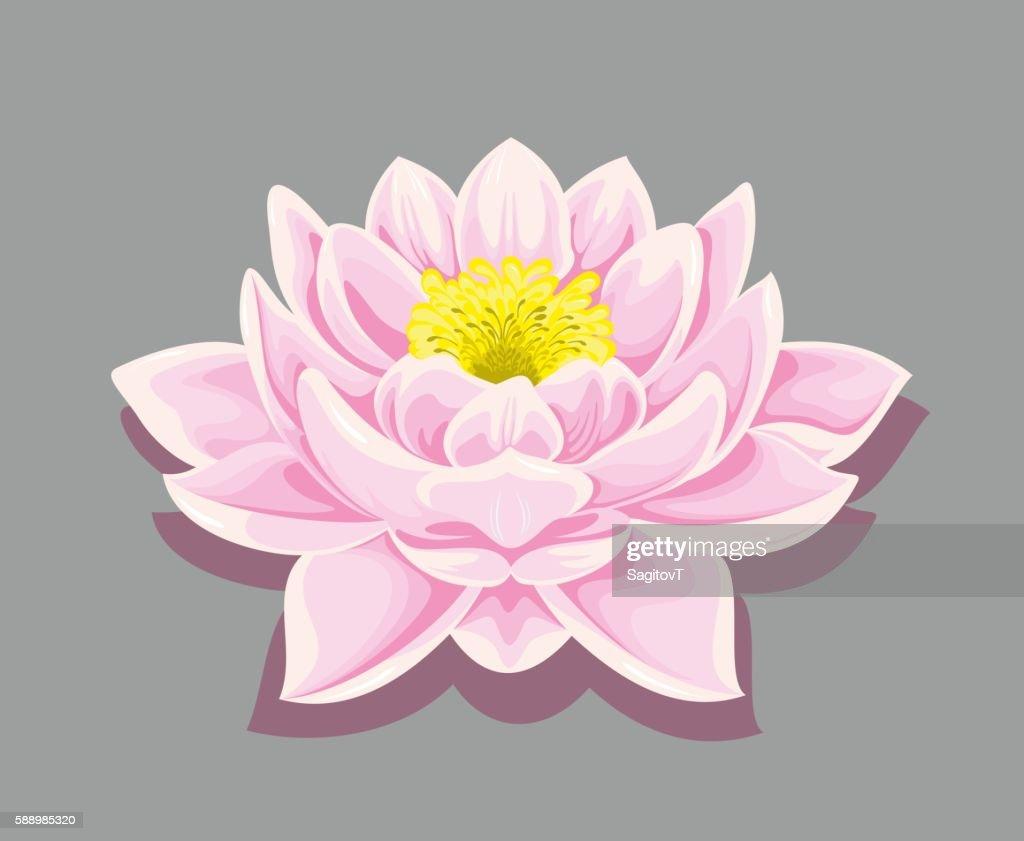 Blooming Lotus Flower Beautiful Yoga Symbol Healthy Lifestyle