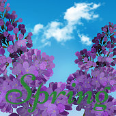 Blooming violet lilac flowers - floral background with blue-sky and light white cloud. The word spring written in green grass. Vector greeting card