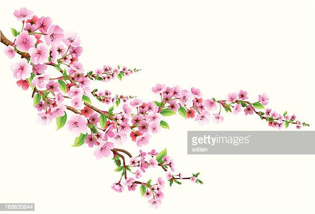 stockillustraties, clipart, cartoons en iconen met blossom - bloesem