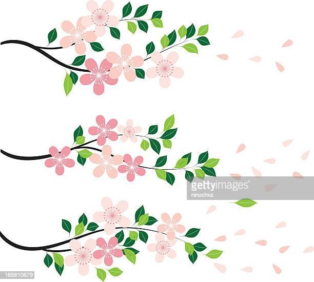 blossom - blütenblatt stock-grafiken, -clipart, -cartoons und -symbole