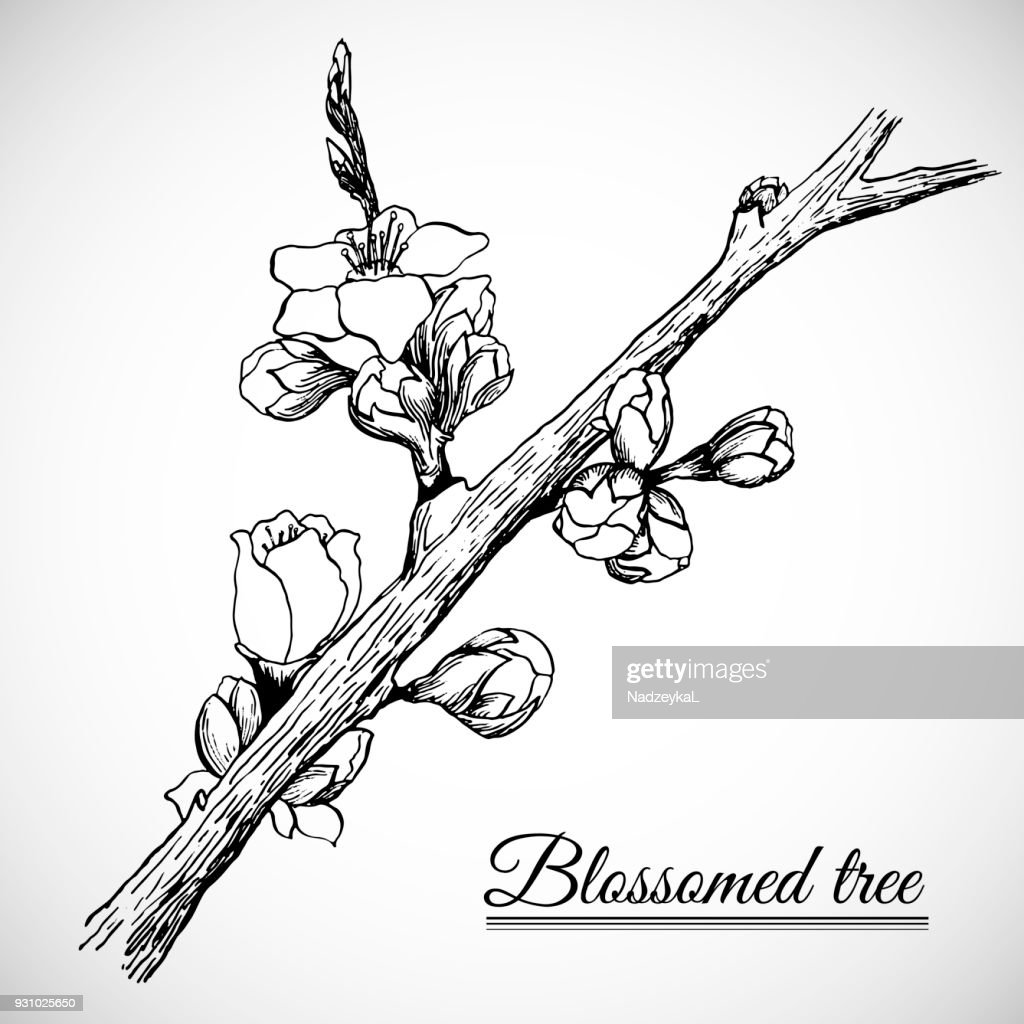 Blossomed tree branch drawn with ink and nib in vector EPS10