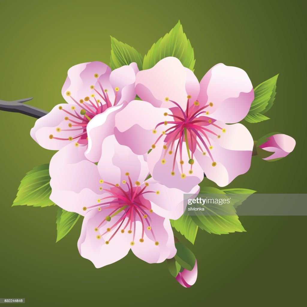 Blossoming Branch Of Japanese Tree Sakura Vector Art Getty Images