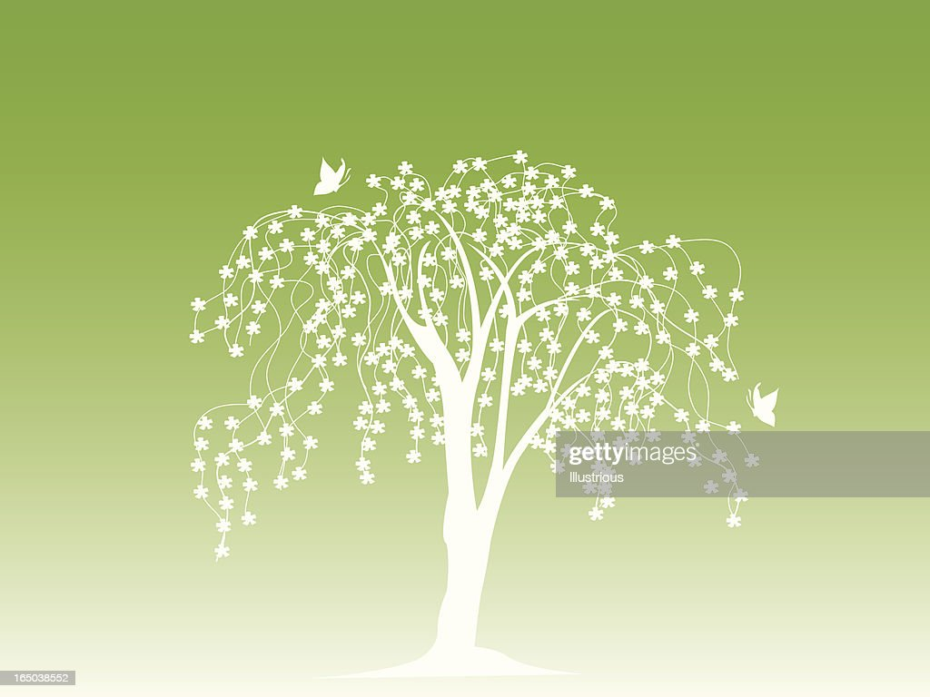 Blossoming Tree Background