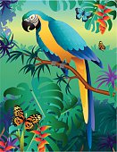 blue and gold macaw in the Amazon rainforest
