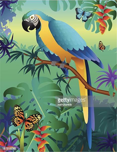 Ara bleu et or dans la forêt amazonienne