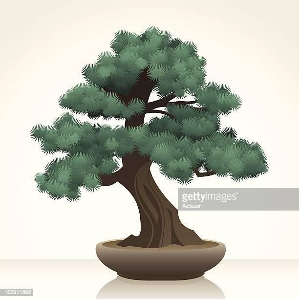 blue atlas cedar bonsai - cedar tree stock illustrations, clip art, cartoons, & icons