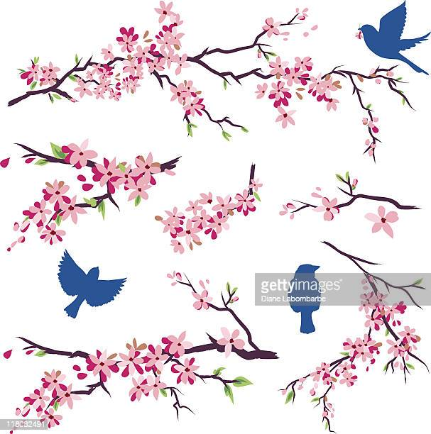 blue birds in different poses & cherry blossoms branch set - cherry blossom stock illustrations, clip art, cartoons, & icons
