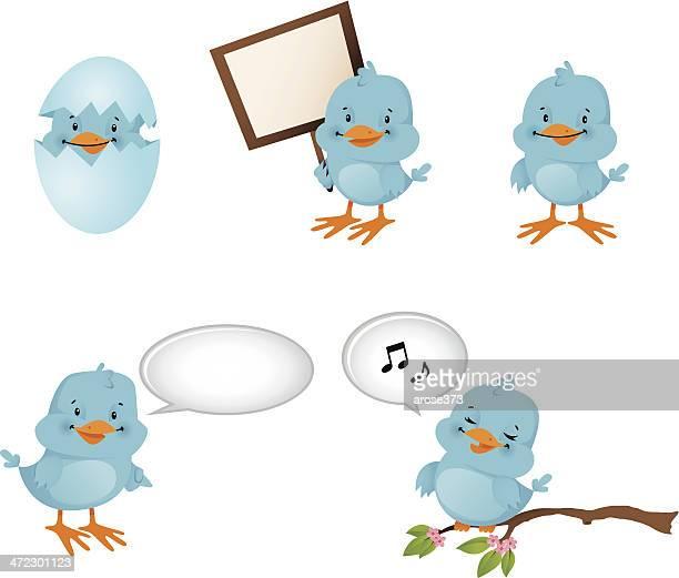 Blue Birds tweet