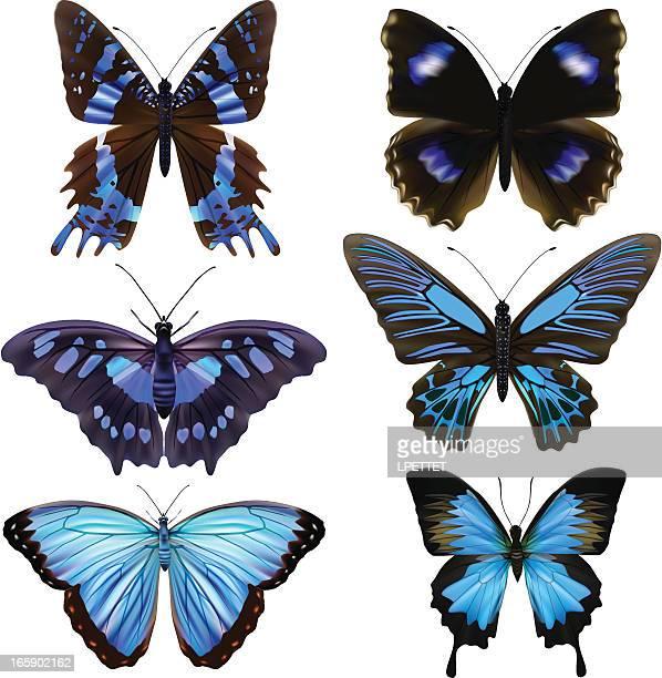 Blue Butterfly's-Vector Illustration