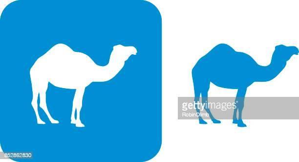 illustrations, cliparts, dessins animés et icônes de icône bleue de chameau - un seul animal