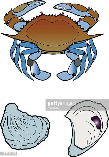 blue crab and oysters - blue crab stock illustrations