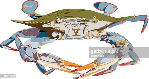 blue crab illustration - blue crab stock illustrations