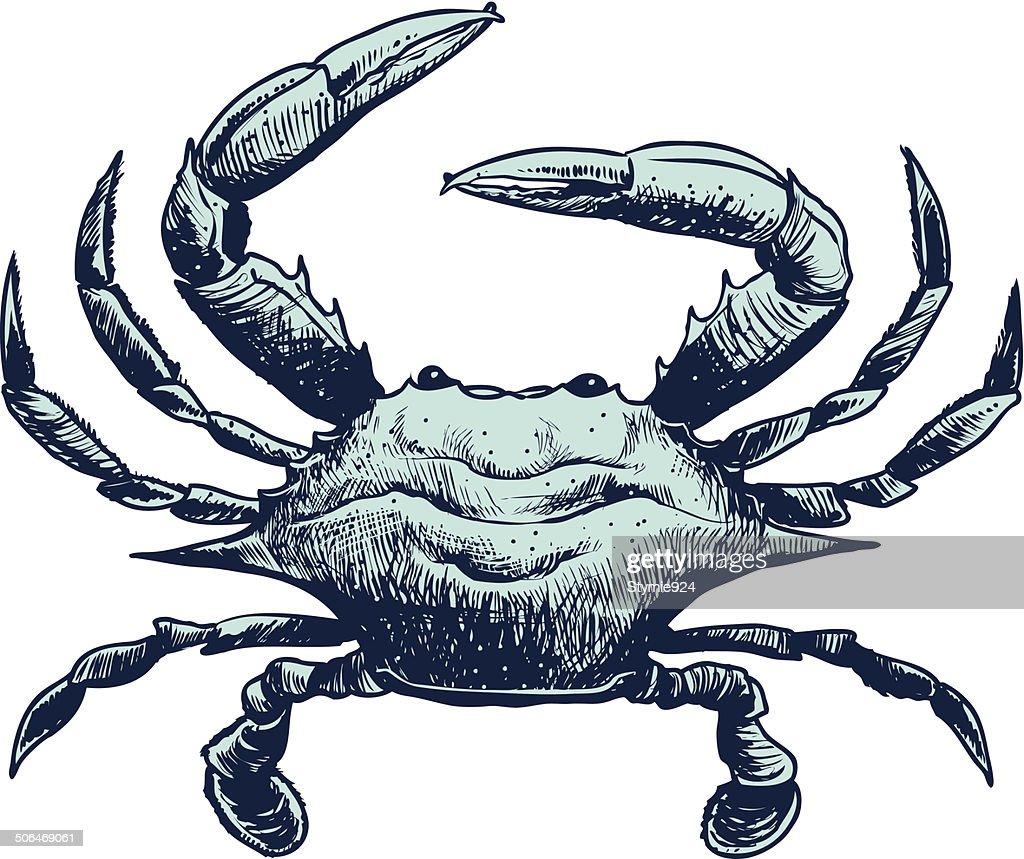 blue crab sketch photos com rh photos com Pink Crab blue crab clipart free