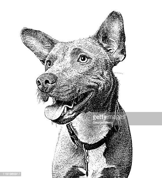 blue heeler, border collie, mixed breed dog mixed breed dog in animal shelter, hoping to be adopted - dog pound stock illustrations