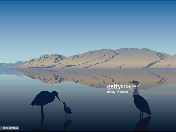 blue heron family - wading stock illustrations