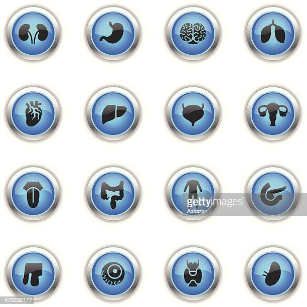 blue icons - human organs - prostate gland stock illustrations, clip art, cartoons, & icons