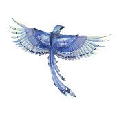 Blue jay bird flying. Watercolor hand drawn illustration. Blue feathers cute bird character.