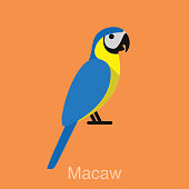 Blue Macaw, bird series