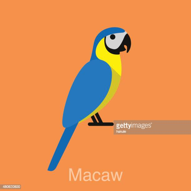 blue macaw, bird series - macaw stock illustrations
