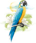 Blue Macaw Parrot Perched on Branch